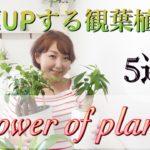 【金運UP】観葉植物の風水と育て方