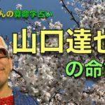 山口達也さんの命式〜算命学占い|第148回