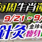 2020生肖運勢週報|09/21-09/27|金玲老師(有字幕)