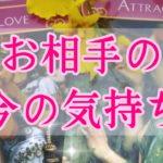 【恋愛】今のお相手の気持ち🍀タロット&オラクルカードリーディング#36